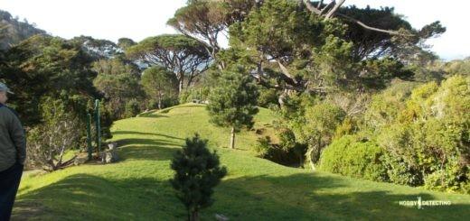 Рыжики из Новой Зеландии (Конкурсная история, золото+!)