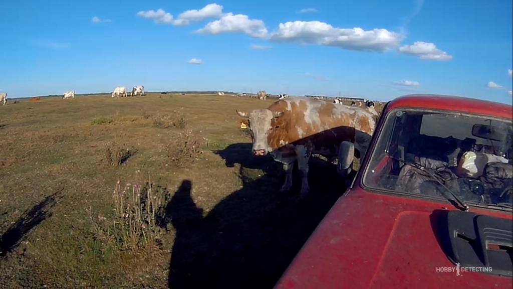 Коп на коровьем поле (Конкурсная история копателя!)