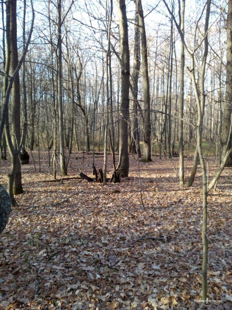 приборный поиск в лесу