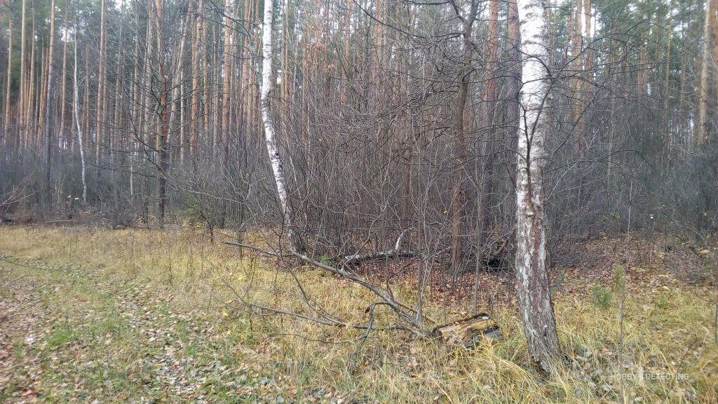 лес как предчувствие