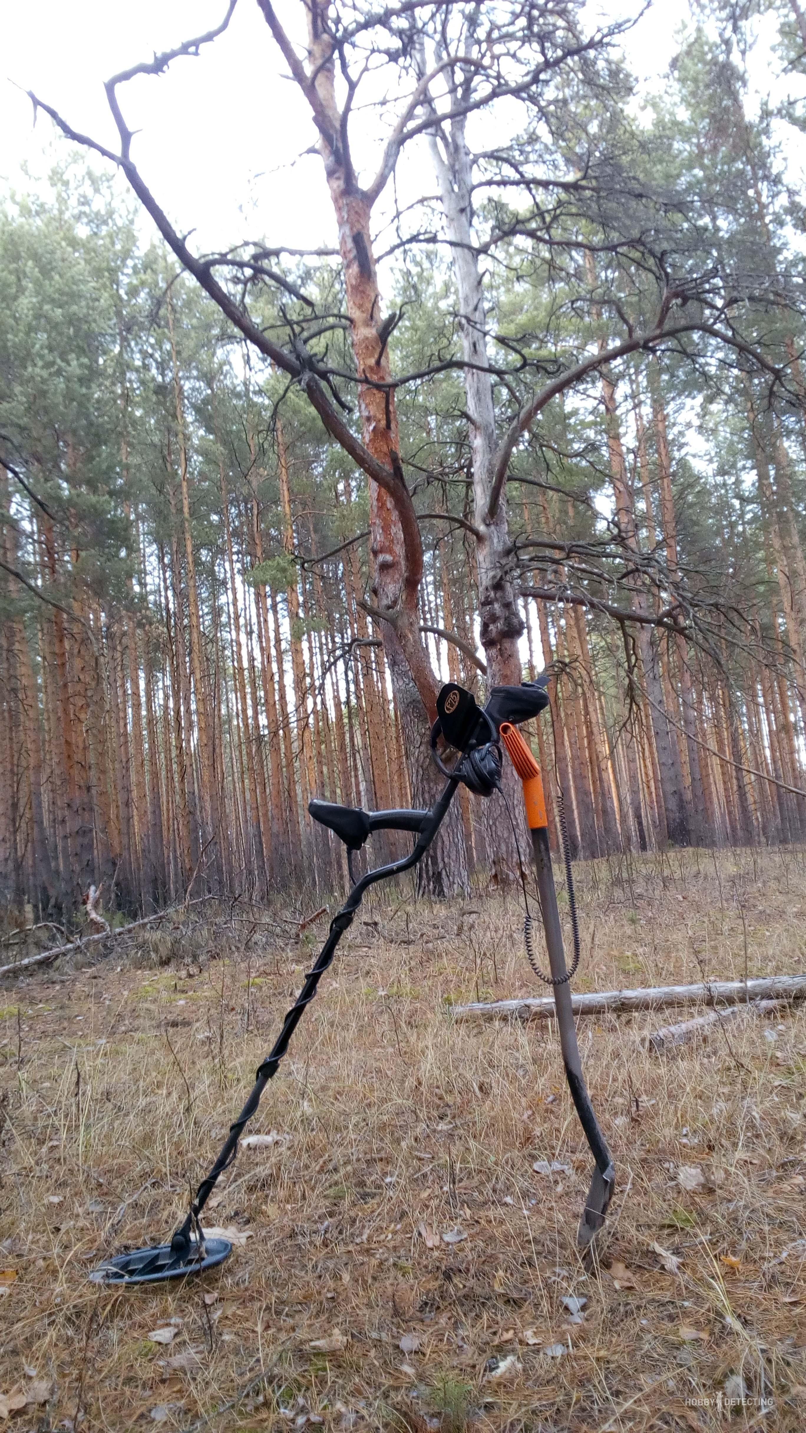 Лес, продолжаем изучать и понимать среду поиска
